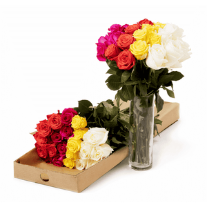 white yellow purple and red roses from eco friendly farms