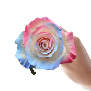 Holi Rose Bouquet - Rosaholics