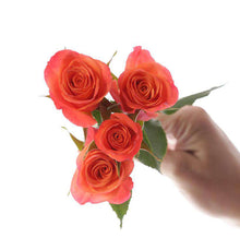 Load image into Gallery viewer, Orange Star Roses