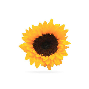 SUNFLOWER - Rosaholics