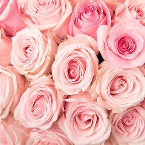 By color, by the dozen light pink - Rosaholics