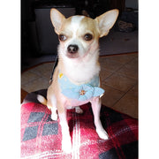 Novelty Baby blue dog chest harness & leash set