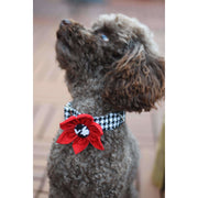 toy poodle in Xolotl fashion houndstooth dog collar flower - puccissime pet couture