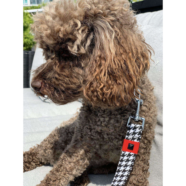 Toy poodle in French bulldog in Xolotl fashion houndstooth dog leash - puccissime pet couture