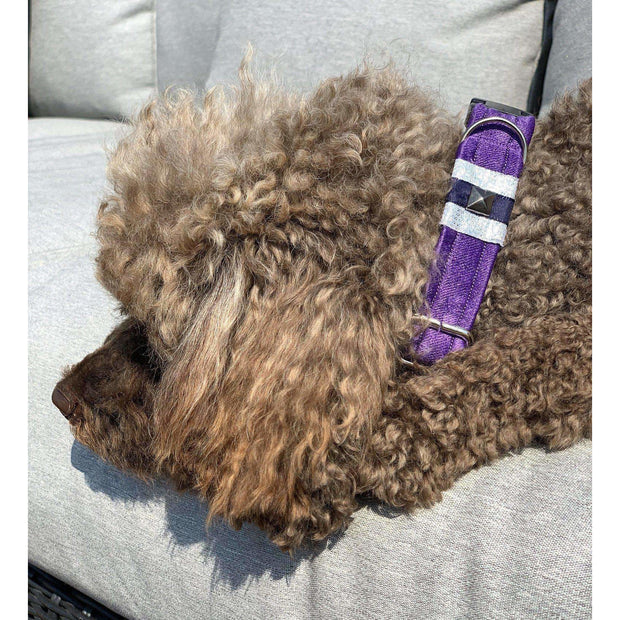 toy poodle in fenrir fashion purple leopard silver blue stripe dog collar - puccissime pet couture