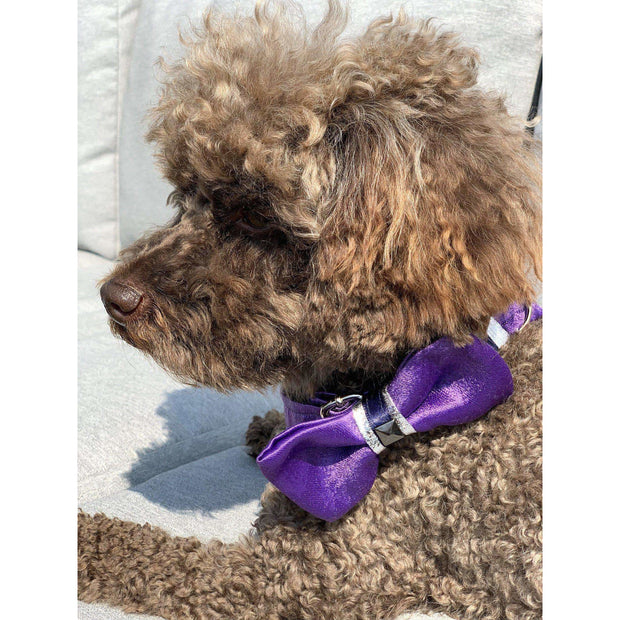 Toy poodle in fenrir fashion purple leopard silver blue stripe dog bowtie - puccissime pet couture