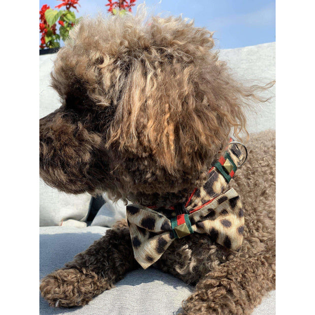 Toy poodle in anubis fashion Gucci style leopard green red stripe dog bowtie - puccissime pet couture