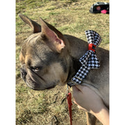 French bulldog in luxury posh designer unique Red houndstooth dog collar and bow tie set - Silver metal buckle - red leather ribbon