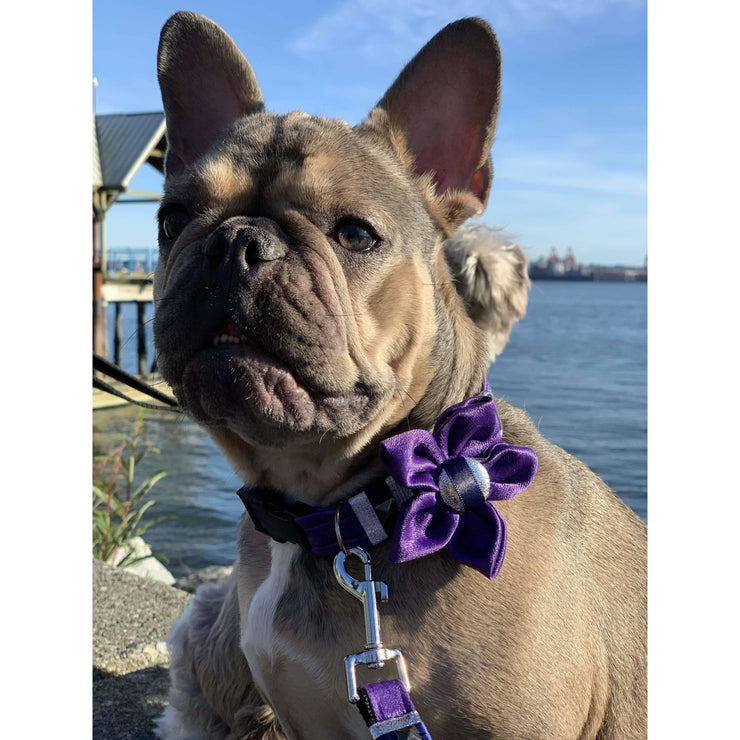 French bulldog in fenrir fashion purple leopard silver blue stripe dog flower accessory - Puccissime pet couture