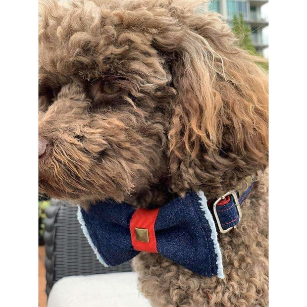 Toy poodle Frayed denim & red dog bow tie with bronze studs - Puccissime Pet Couture