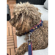 toy poodle in Frayed denim & red dog collar leash set with bronze studs - Puccissime Pet Couture