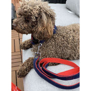 toy poodle in toy poodle in Frayed denim & red dog leash with bronze studs - Puccissime Pet Couture