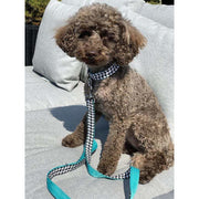 Toy poodle in kerberos fashion houndstooth turquoise dog collar- Puccissime pet couture