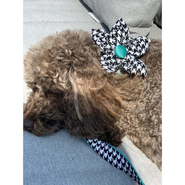 Toy poodle in kerberos fashion houndstooth turquoise dog flower- Puccissime pet couture
