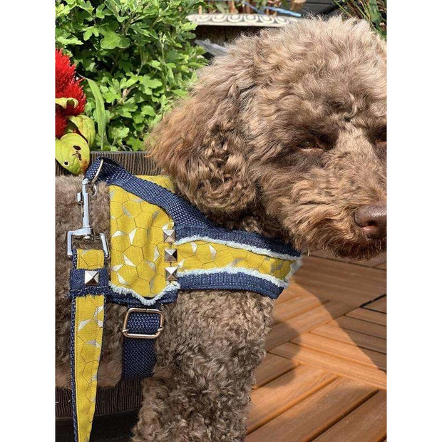 Toy poodle in Mustard honeycomb frayed denim dog harness with silver metal buckle - Puccissime pet couture