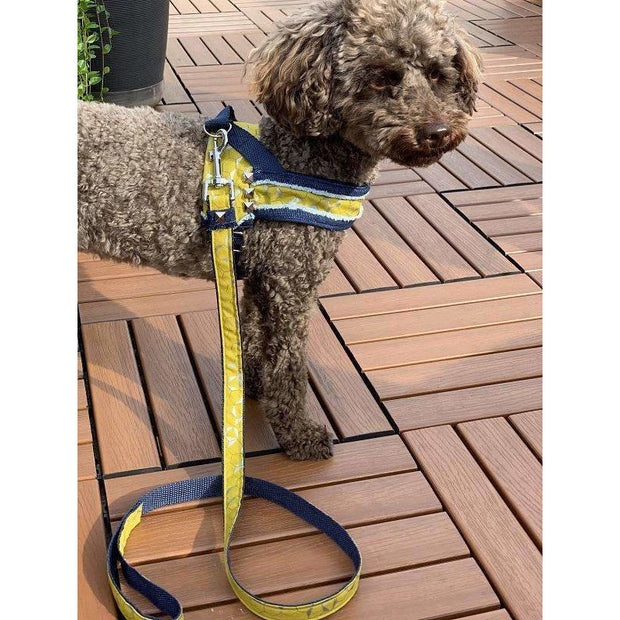 Toy poodle in Mustard honeycomb frayed denim dog leash - Puccissime pet couture
