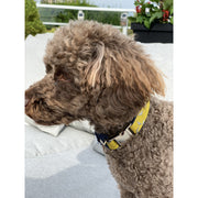 brown toy poodle wearing Mustard denim dog collar & bow tie set