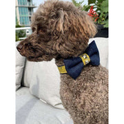 Toy poodle in Mustard honeycomb frayed denim dog bow tie - Puccissime pet couture