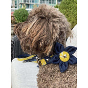 Toy poodle in Mustard honeycomb frayed denim dog collar flower - Puccissime pet couture
