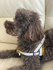 sunrise one-click harness- Norwegian Dog harness-  Yellow white leather navy harness easy wear no pull no choke -Puccissime Pet Couture