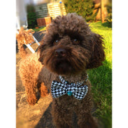 Toy poodle in kerberos fashion houndstooth turquoise dog bowtie - Puccissime Pet Couture