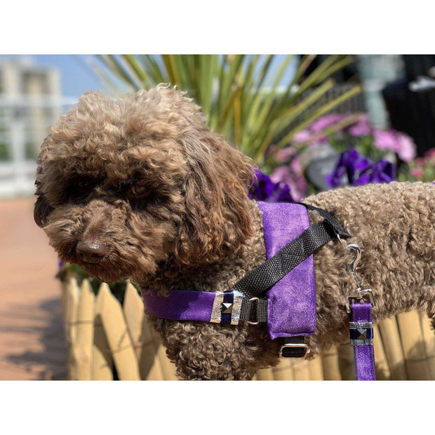 toy poodle in fenrir fashion purple leopard silver blue stripe dog harness - puccissime pet couture