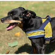 Pincher in Mustard honeycomb frayed denim dog harness with silver metal buckle - Puccissime pet couture