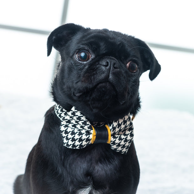 black pug wearing Houndstooth mustard with real leather accent dog collar & bow tie