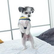 Mustard honeycomb denim dog harness