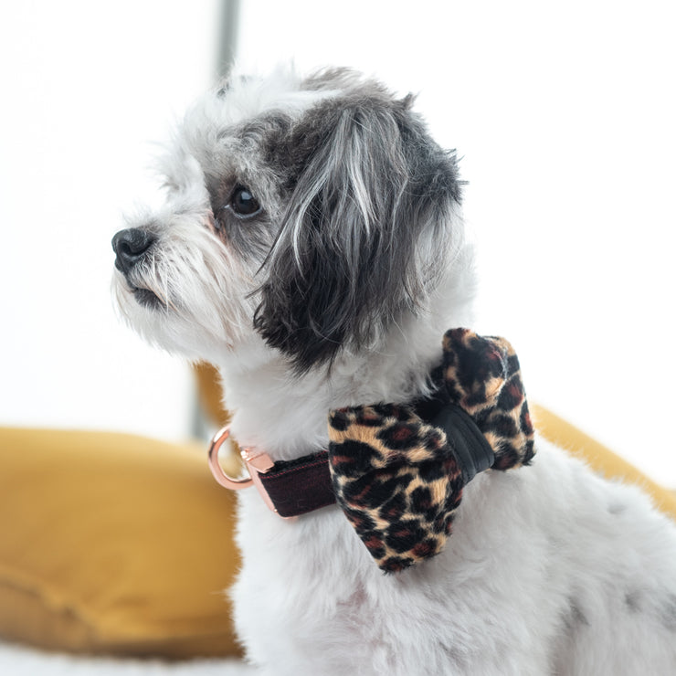 Leopard dog bow tie with leather accent
