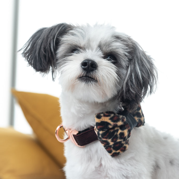 Leopard dog bow tie with leather accent- Dropship