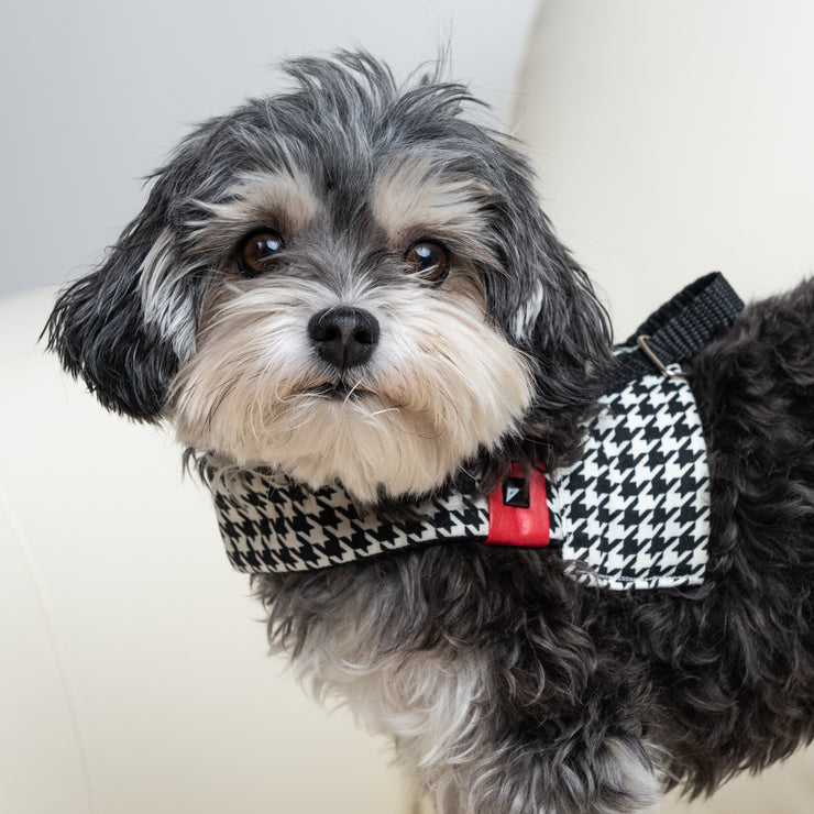Xolotl pied de poule dog harness