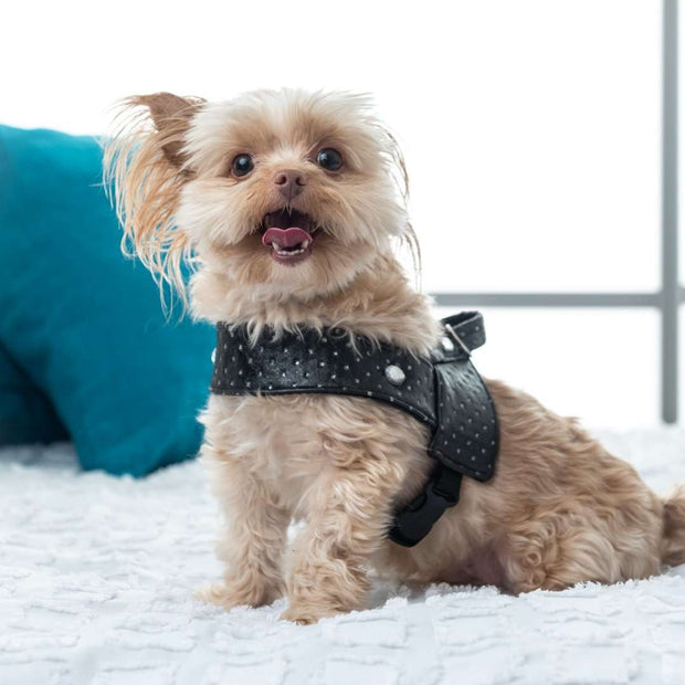 Black glitter leather dog harness with Swarovski crystals