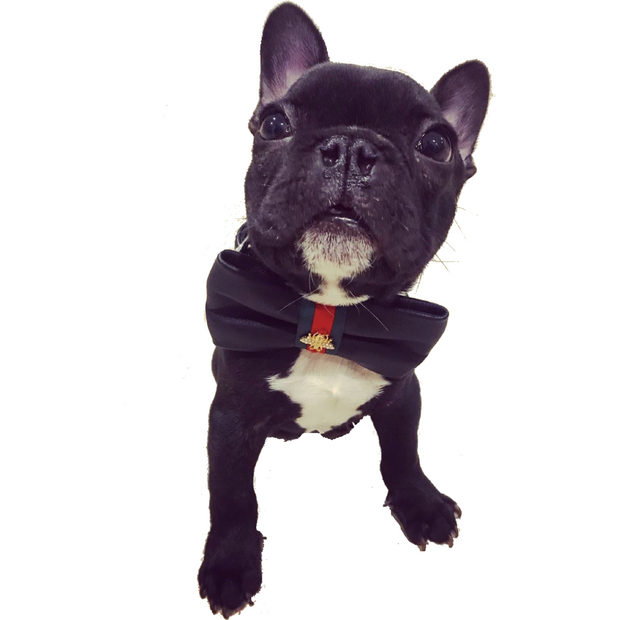 Black leather designer collar, Leash & bow tie - Dropship