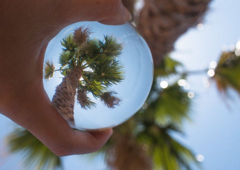 Lensball Palm Trees
