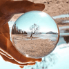 Lensball Tree Photo