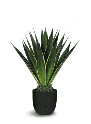 ARTIFICIAL GREEN/YELLOW GIANT AGAVE 36 x 36 x 40-furniture stores regina-Hunters Furniture