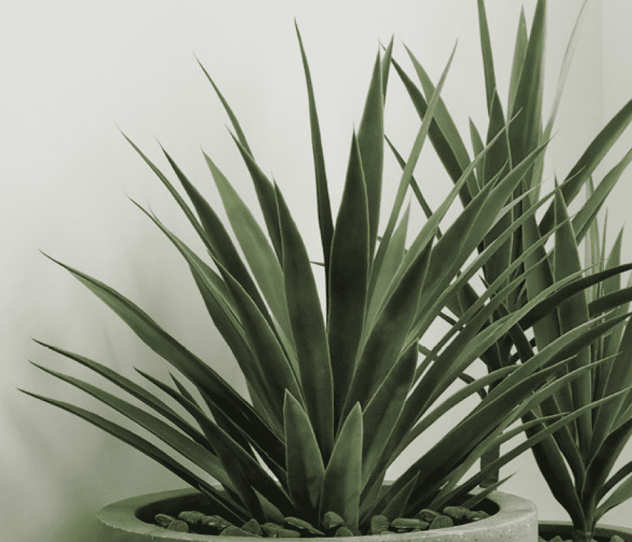ARTIFICIAL YUCCA PLANT(Potted) 90 x x-furniture stores regina-Hunters Furniture