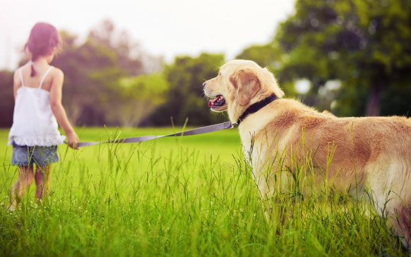 Are Mosquito Bites A Danger To Your Dog's Health?