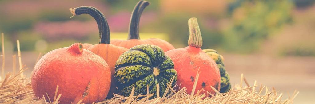 10 Fall Activities to Welcome the Season