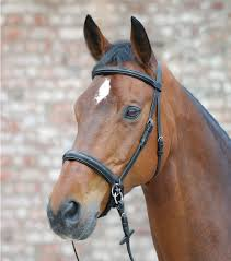 Full WH Star Bitless Bridle 2 Brown