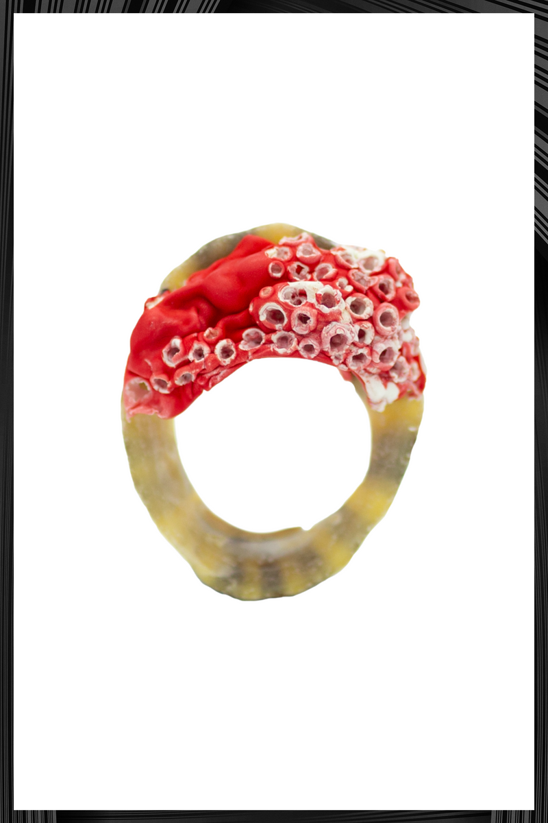 Red Barnacle Shell Ring