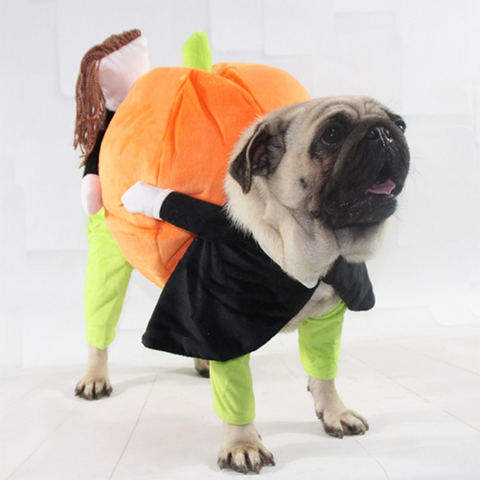 Halloween Pumpkin Doggy Costume
