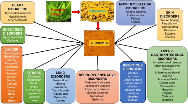 Curcumin uses and benefits