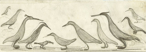 Joseph Hecht - preparatory drawing for Oiseaux de Madagascar II