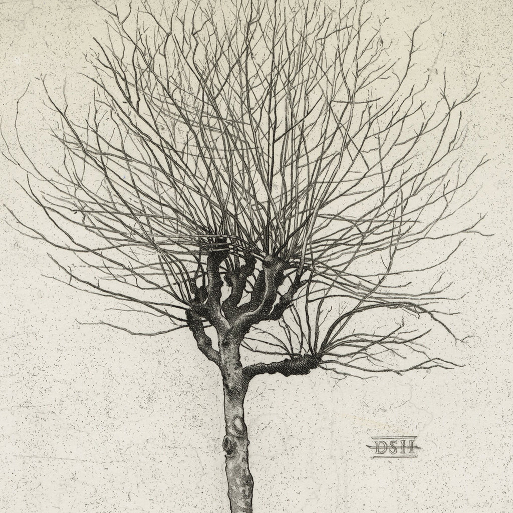 David Smith-Harrison - Plane Tree A - etching realism