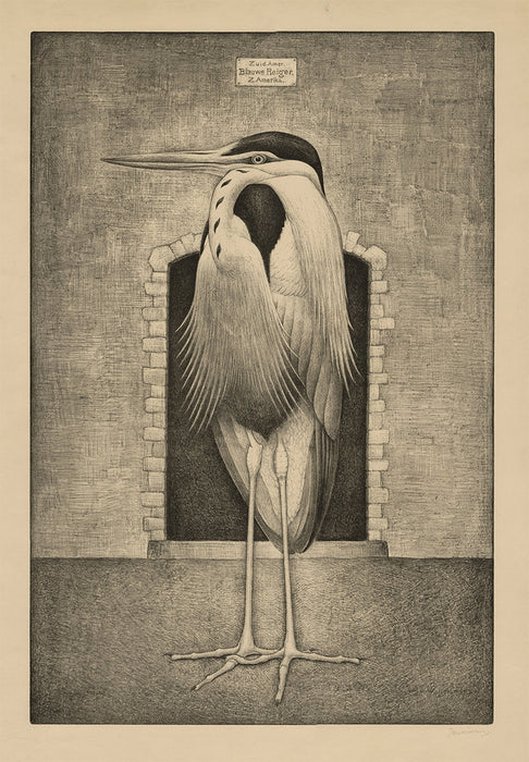 Jan Hendrik Willem Wittenberg - South American Great Blue Heron - main