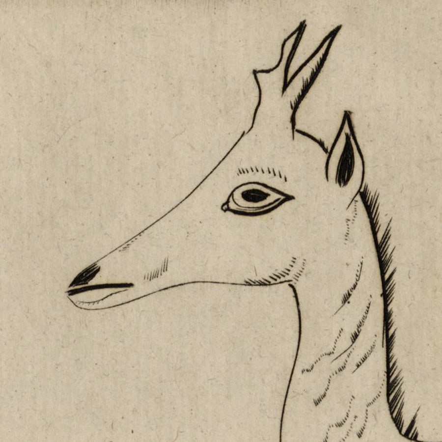 Joseph Hecht Tete de Jeune Cerf (original French title) Head of a Young Deer - engraving on laid paper, 1928.