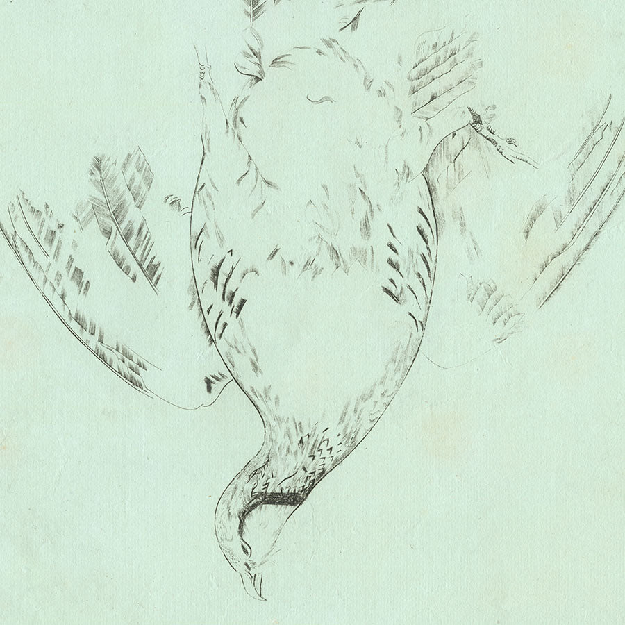 Joseph Hecht - Perdrix Rouge - red-legged partridge - Alectoris rufa - engraving - papier verdatre - detail
