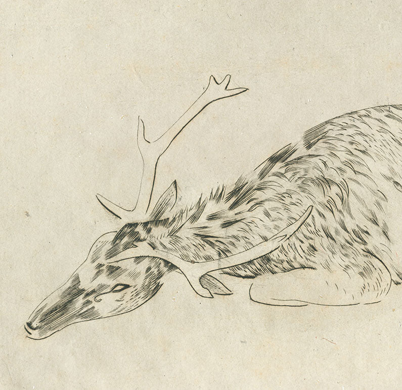 Joseph Hecht - Cerf Mourant - Deer - pure line engraving